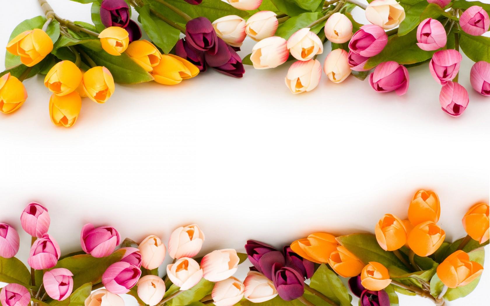 Природа пейзаж весна тюльпаны цветы
