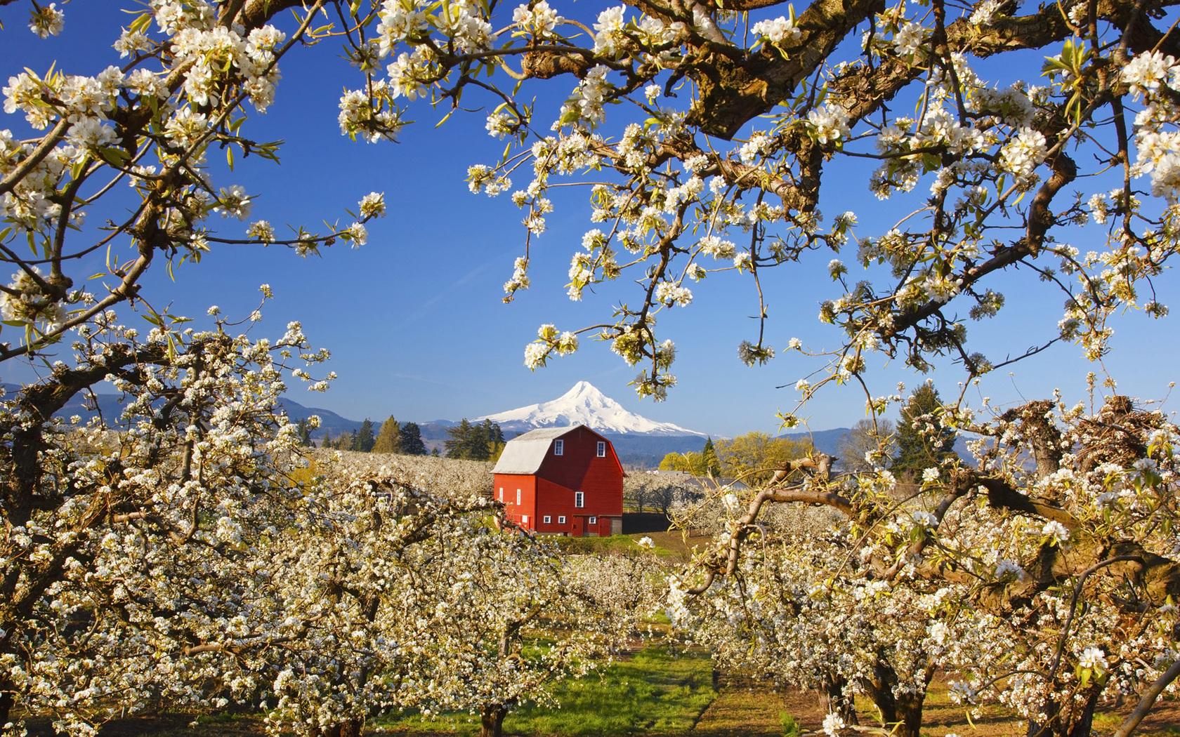 Природа пейзаж весна яблони дом