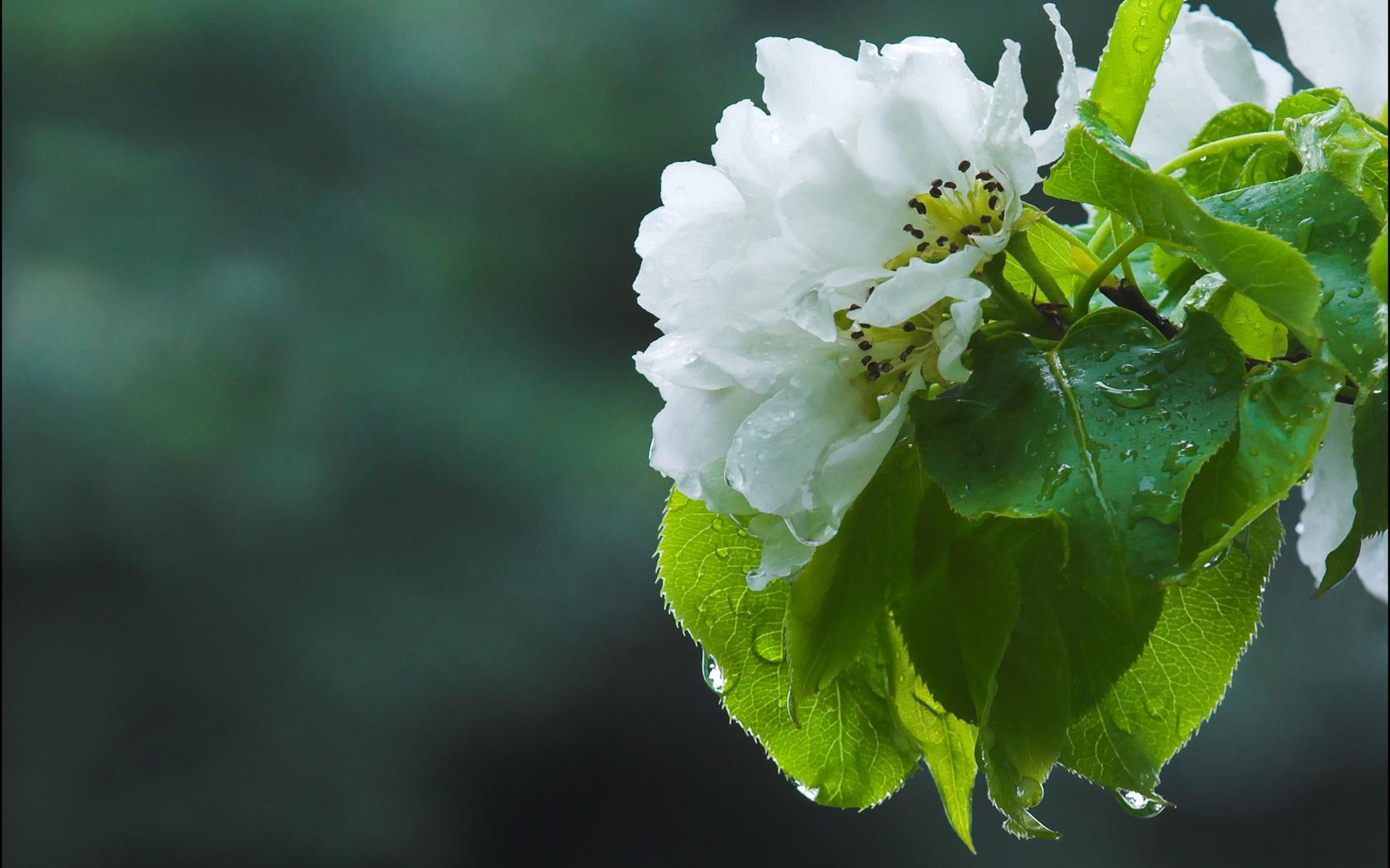 Природа пейзаж весна цветы яблоня