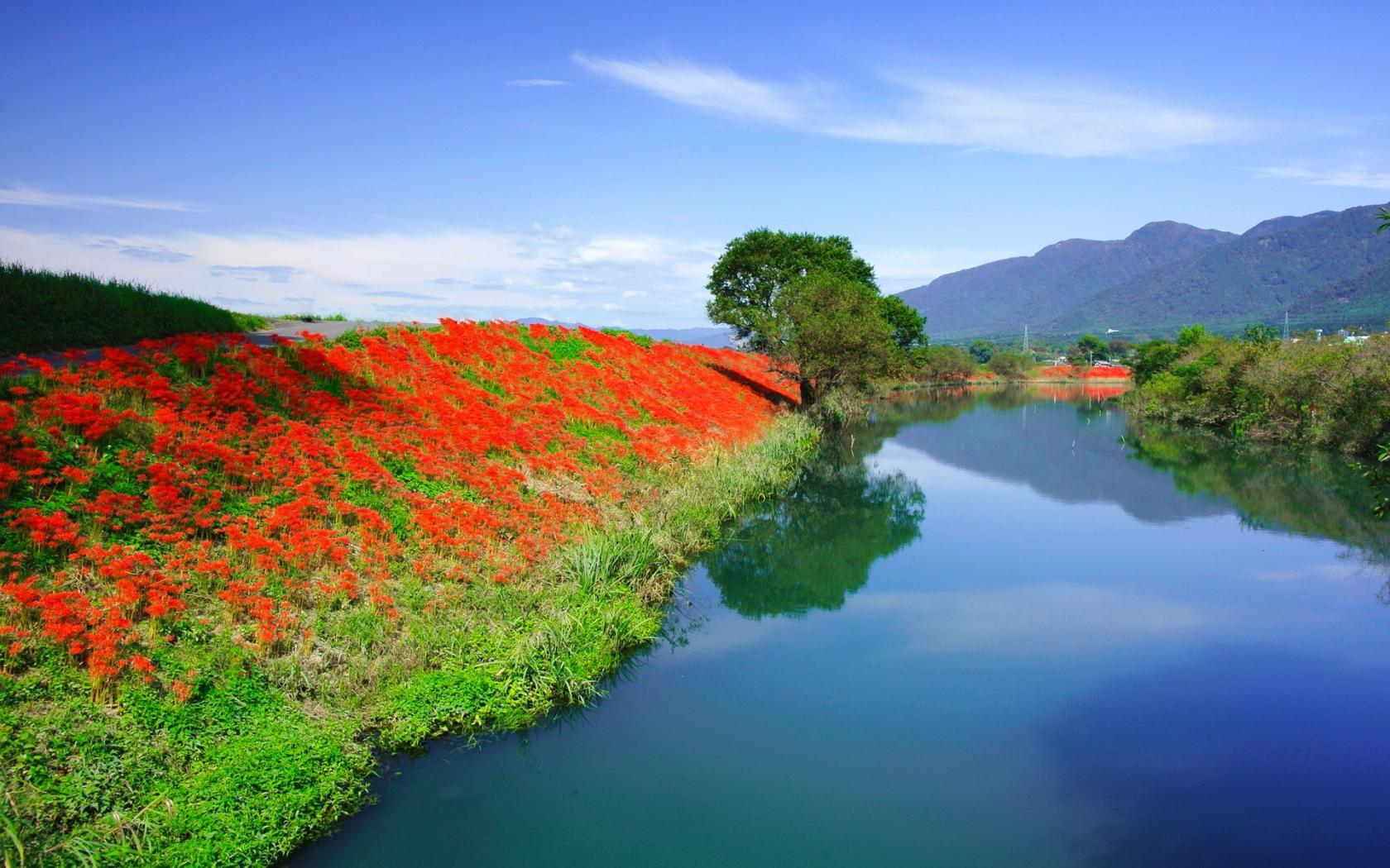Цветы красота тишина красивые обои
