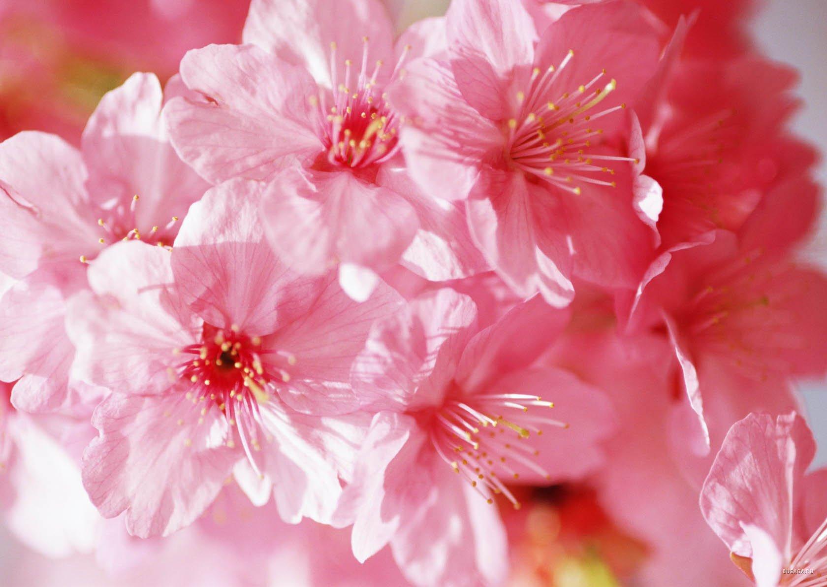 Природа пейзаж весна цветы красиво