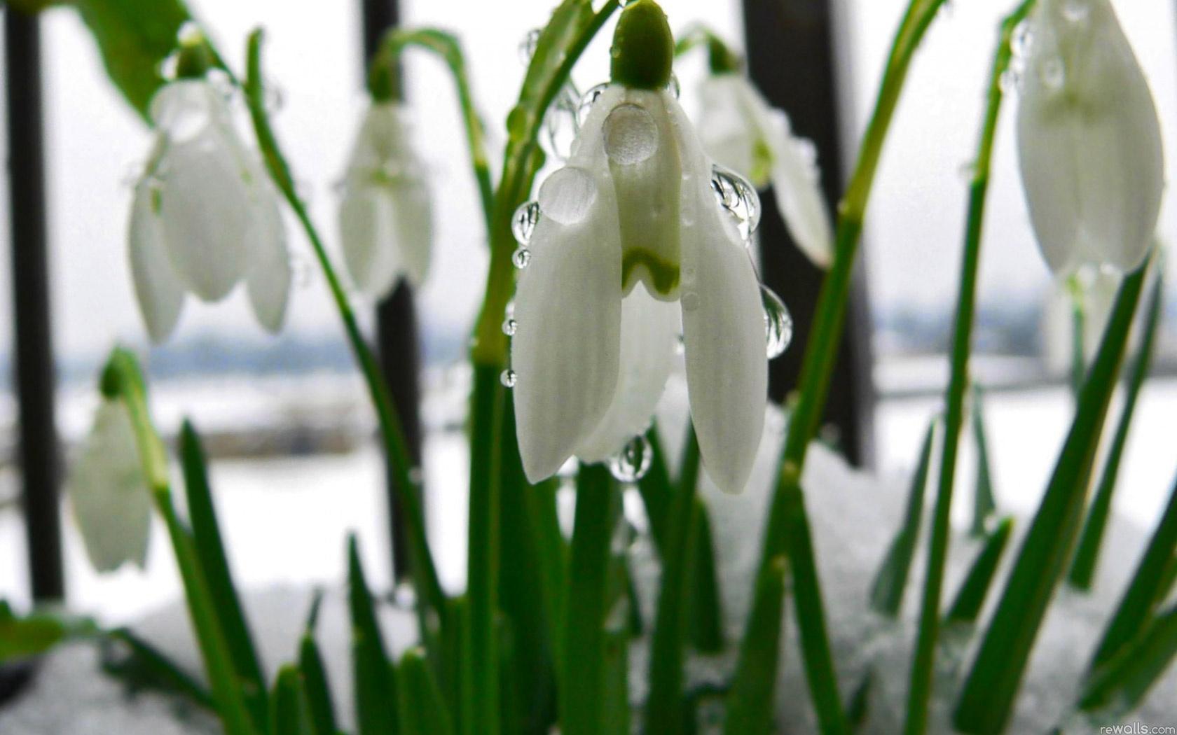 Природа пейзаж весна цветы