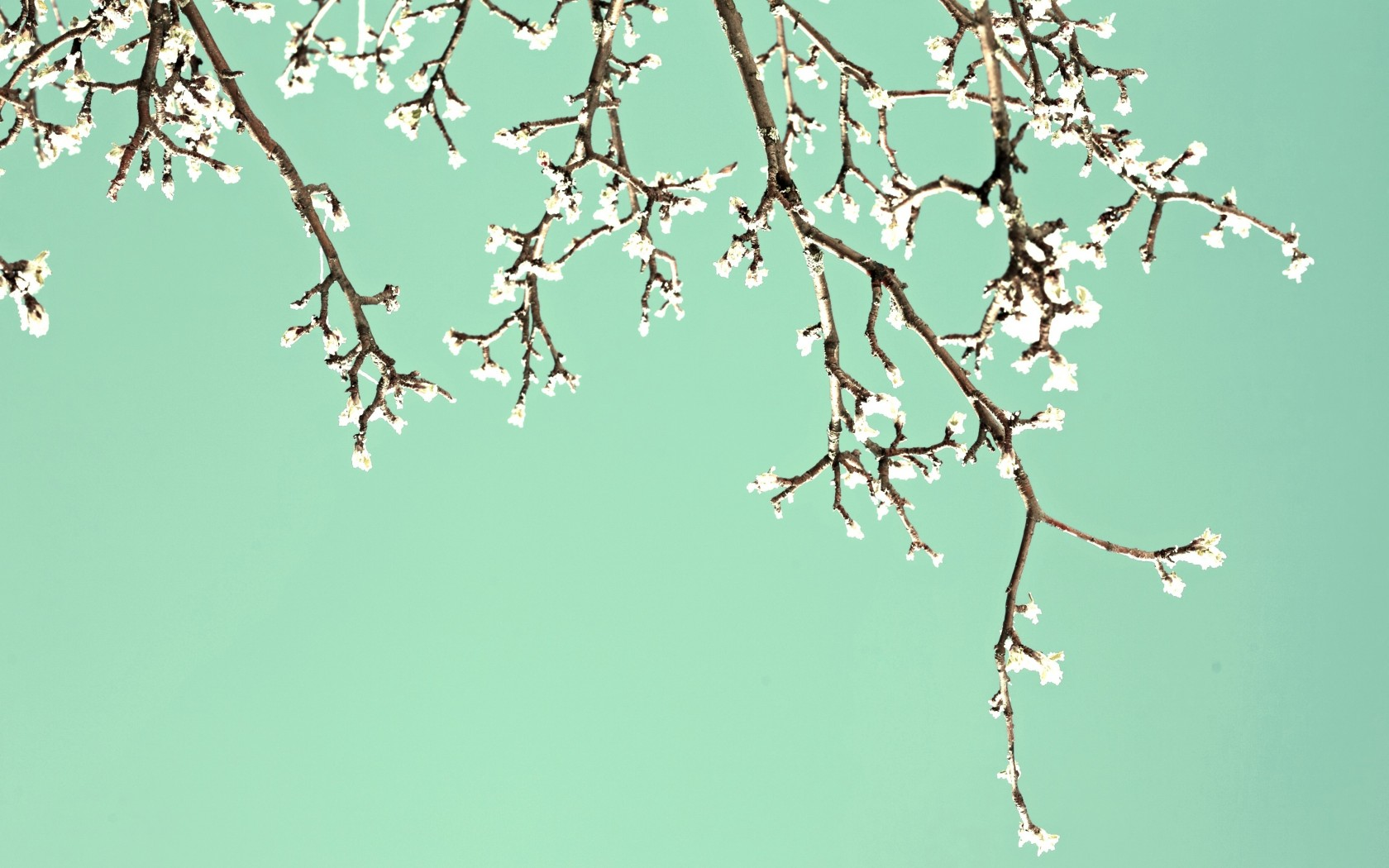 Обои для рабочего стола природа весна