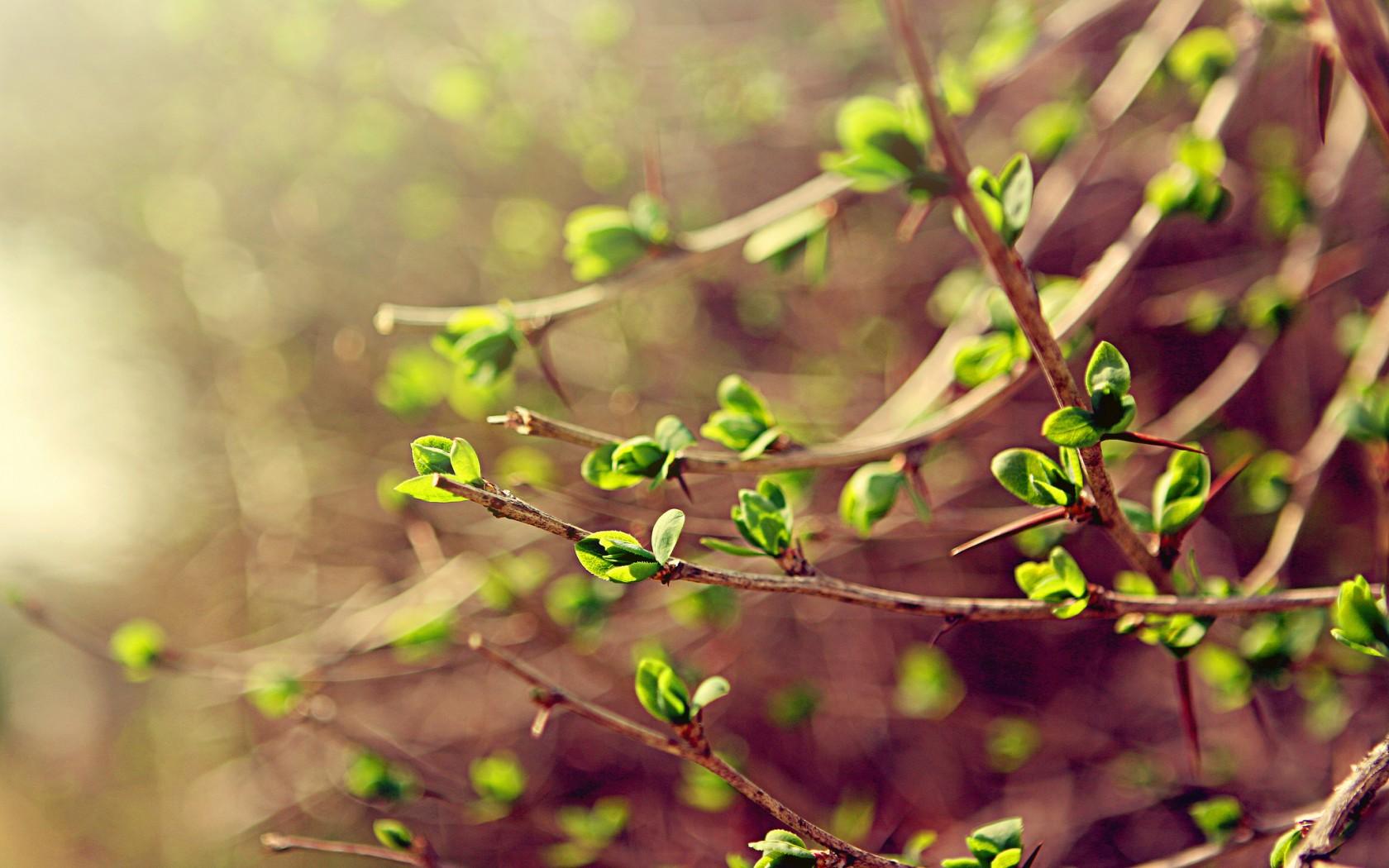 Природа пейзаж весна листья ветки