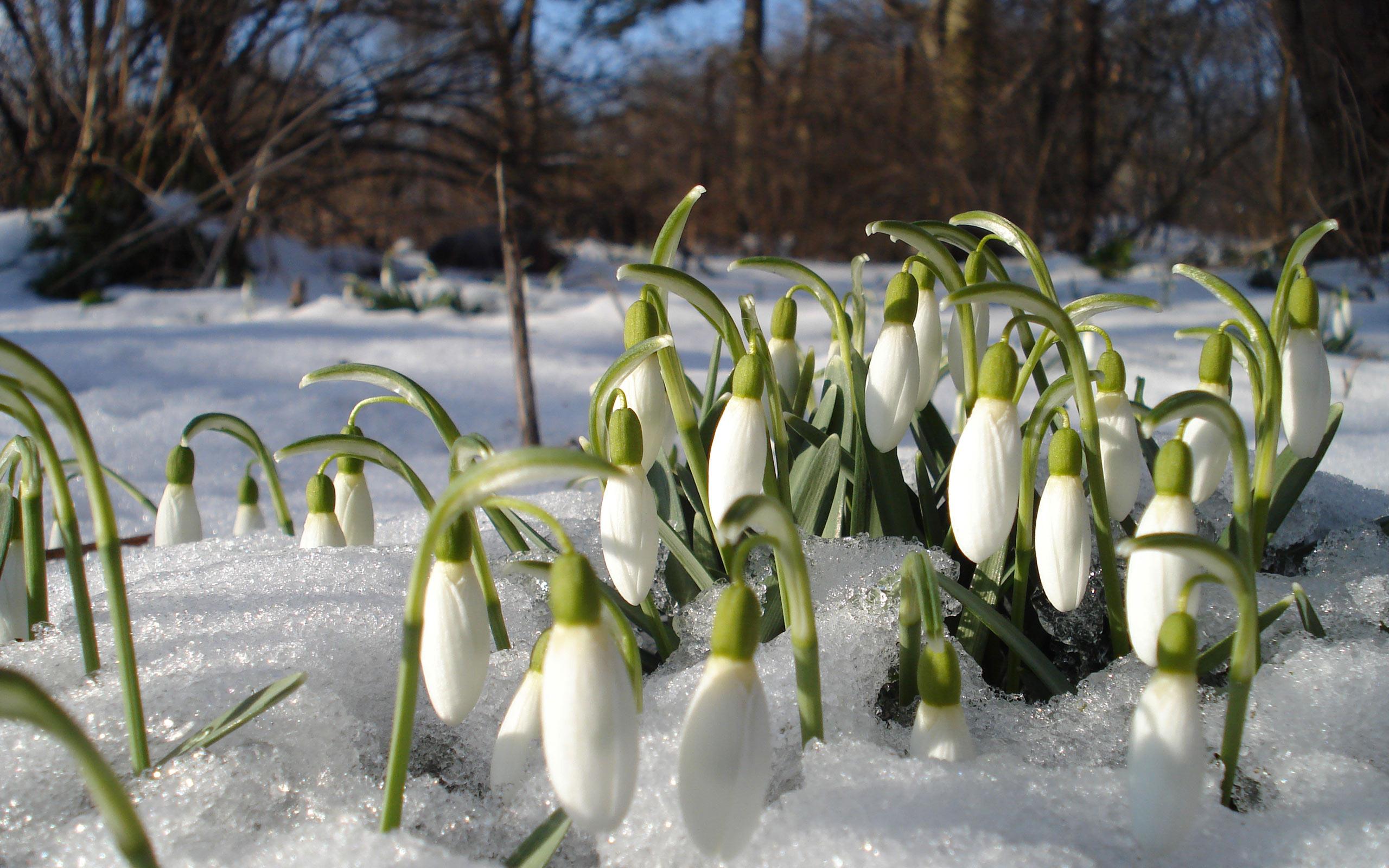 Природа пейзаж весна проталины цветы