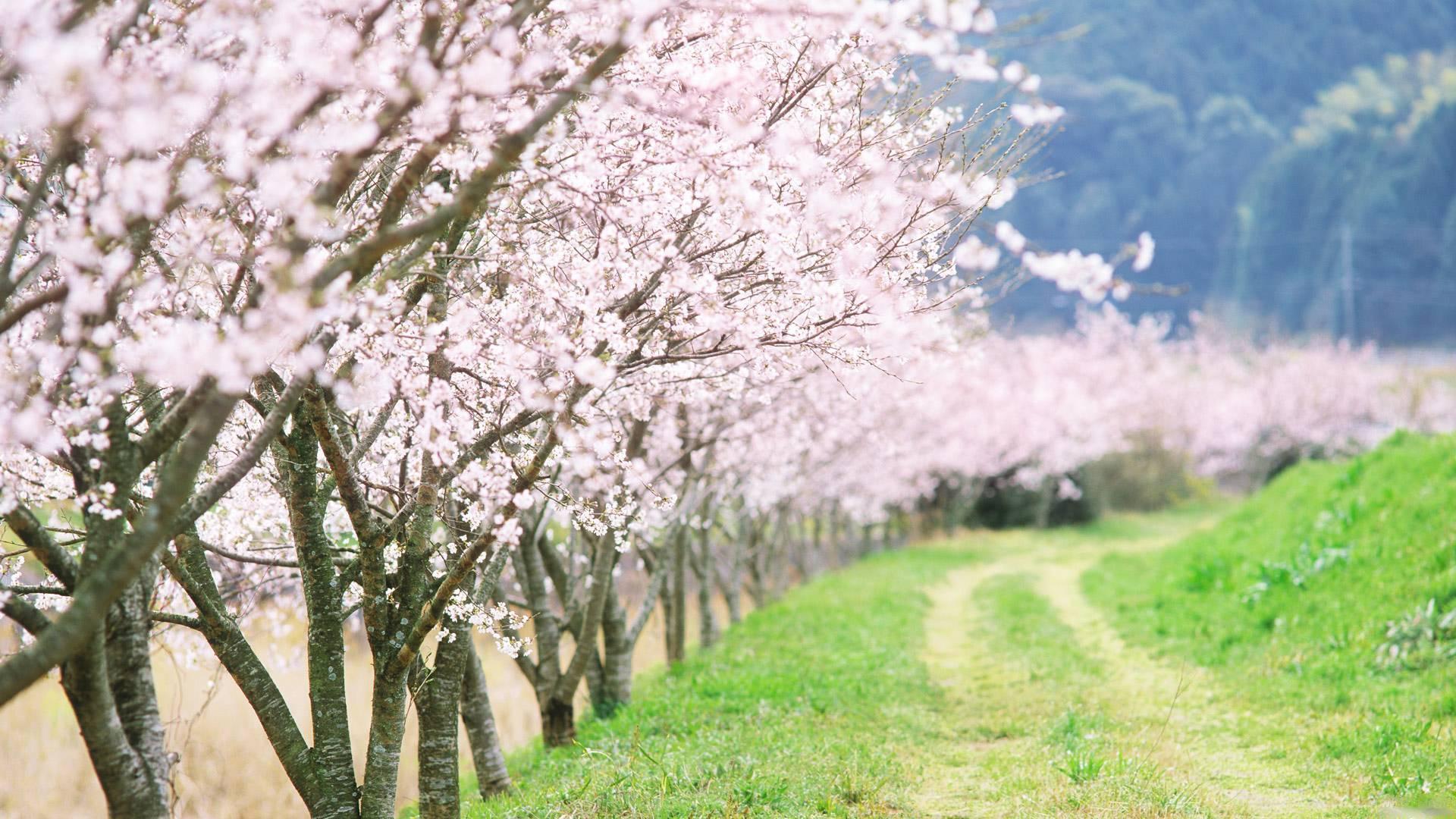 Дорога деревья красивые обои рабочий