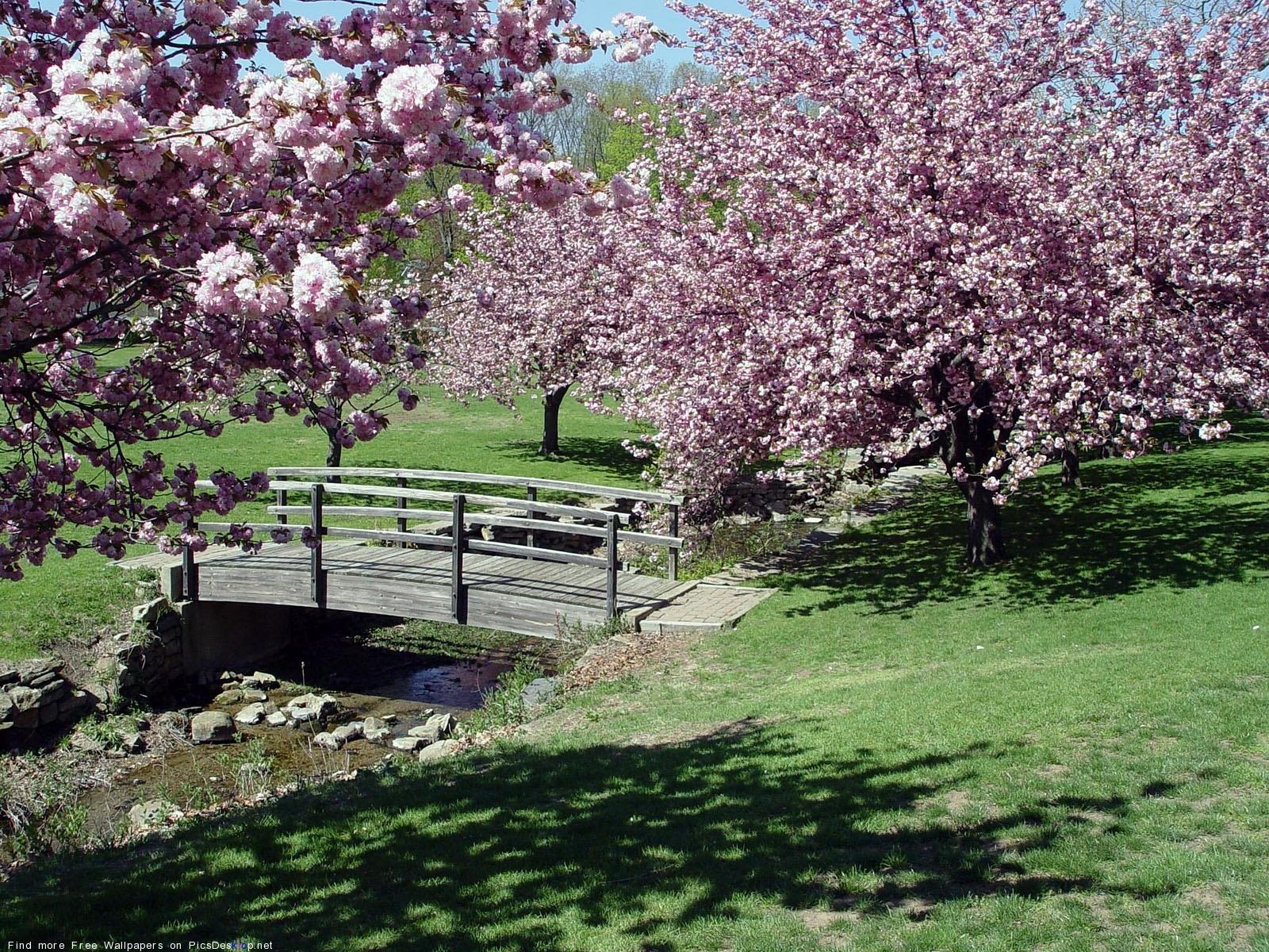 Весна сакура, мост, цветы, япония фото ...: priroda-foto.ucoz.ru/photo/vesna/sakura_most_cvety_japonija/1-0-185