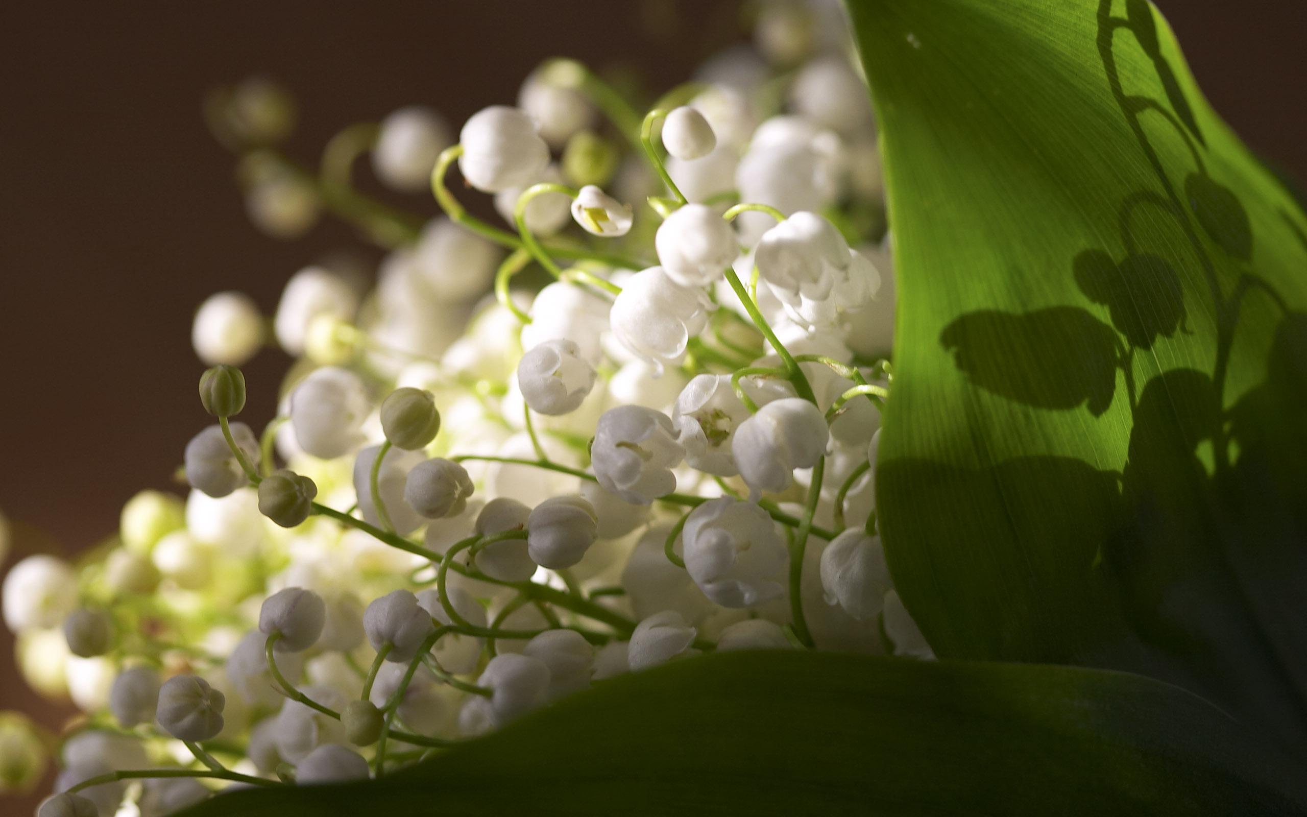 Природа, пейзаж весна ландыши, листья