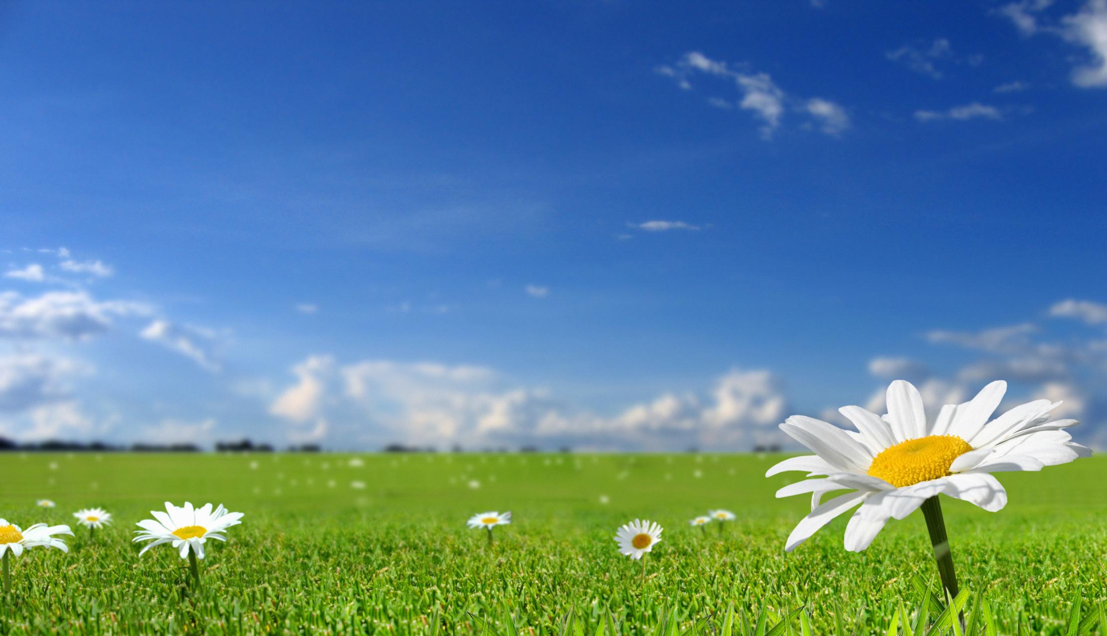 Поле трава красивые обои рабочий стол