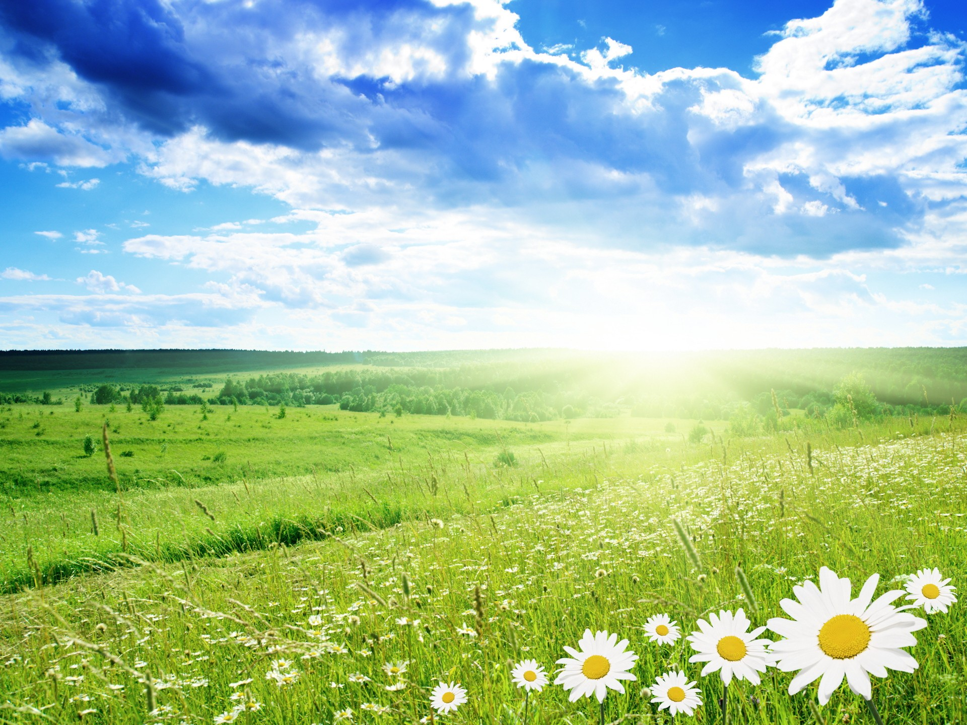 Природа пейзаж весна ромашки поле