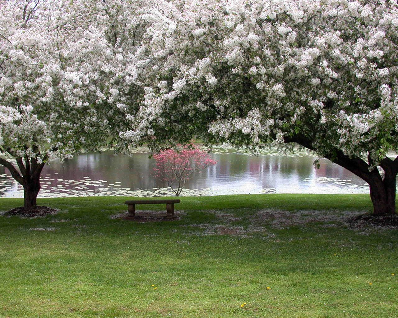 Природа пейзаж весна лавочка сад
