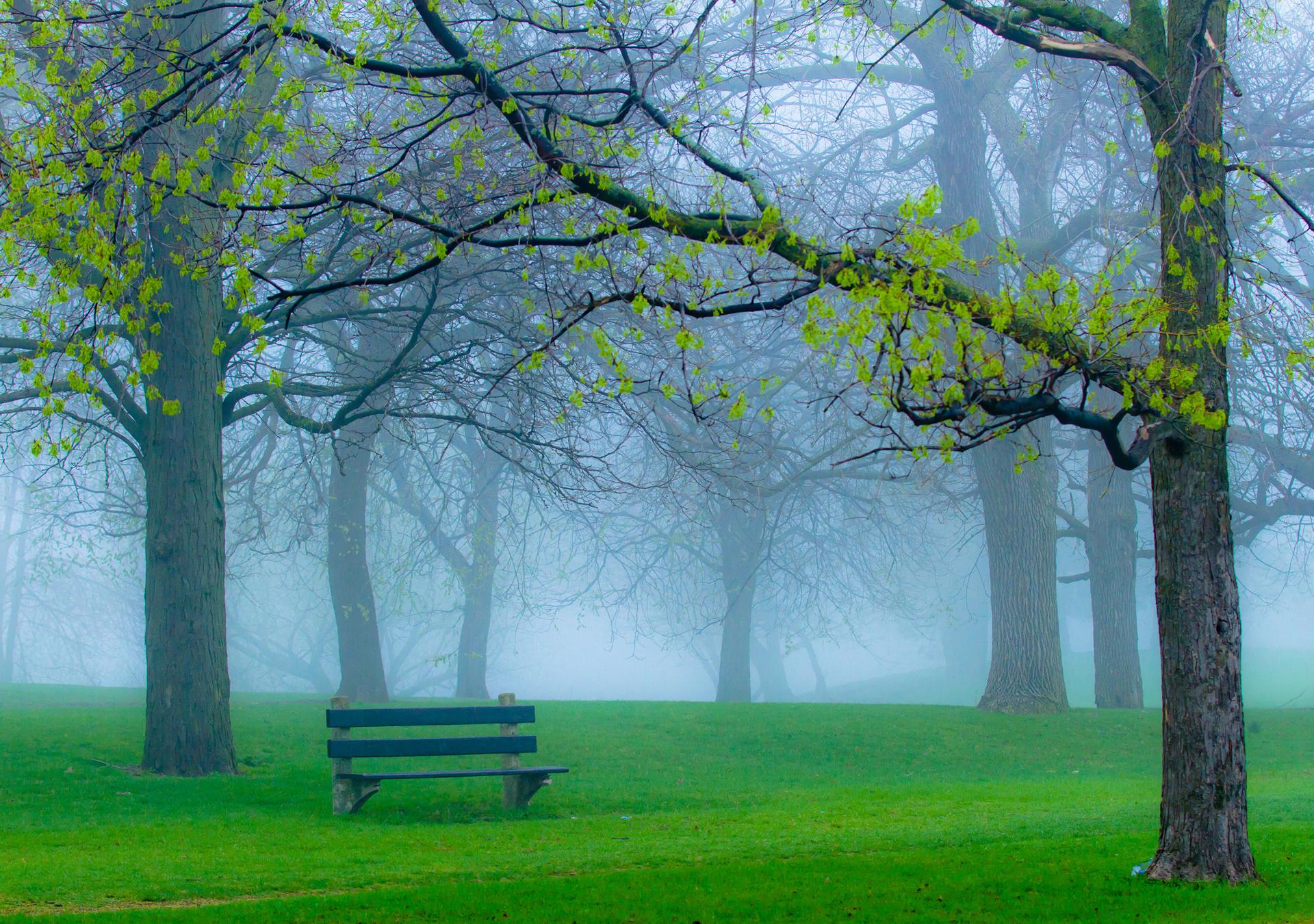 Природа пейзаж весна парк туман