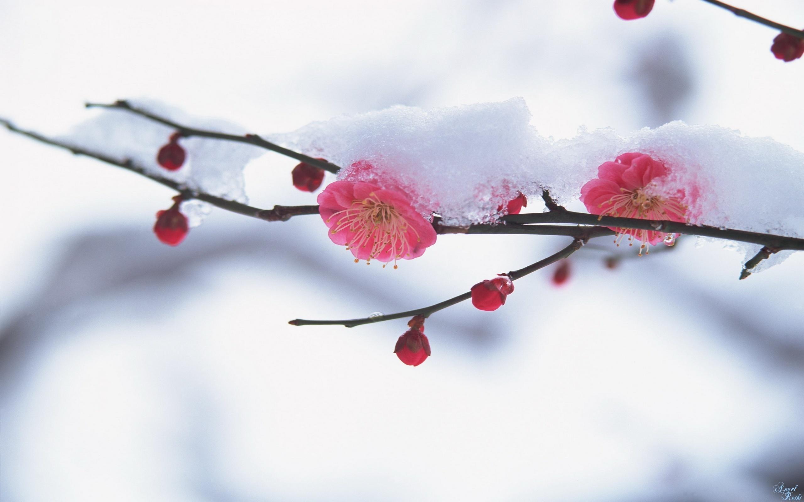 Ветвь снег красивые обои рабочий стол