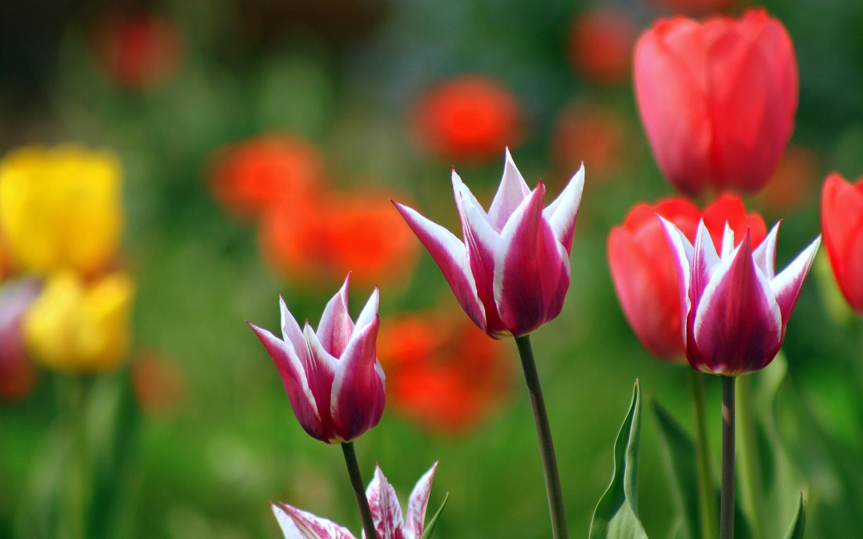 Природа, пейзаж весна растения