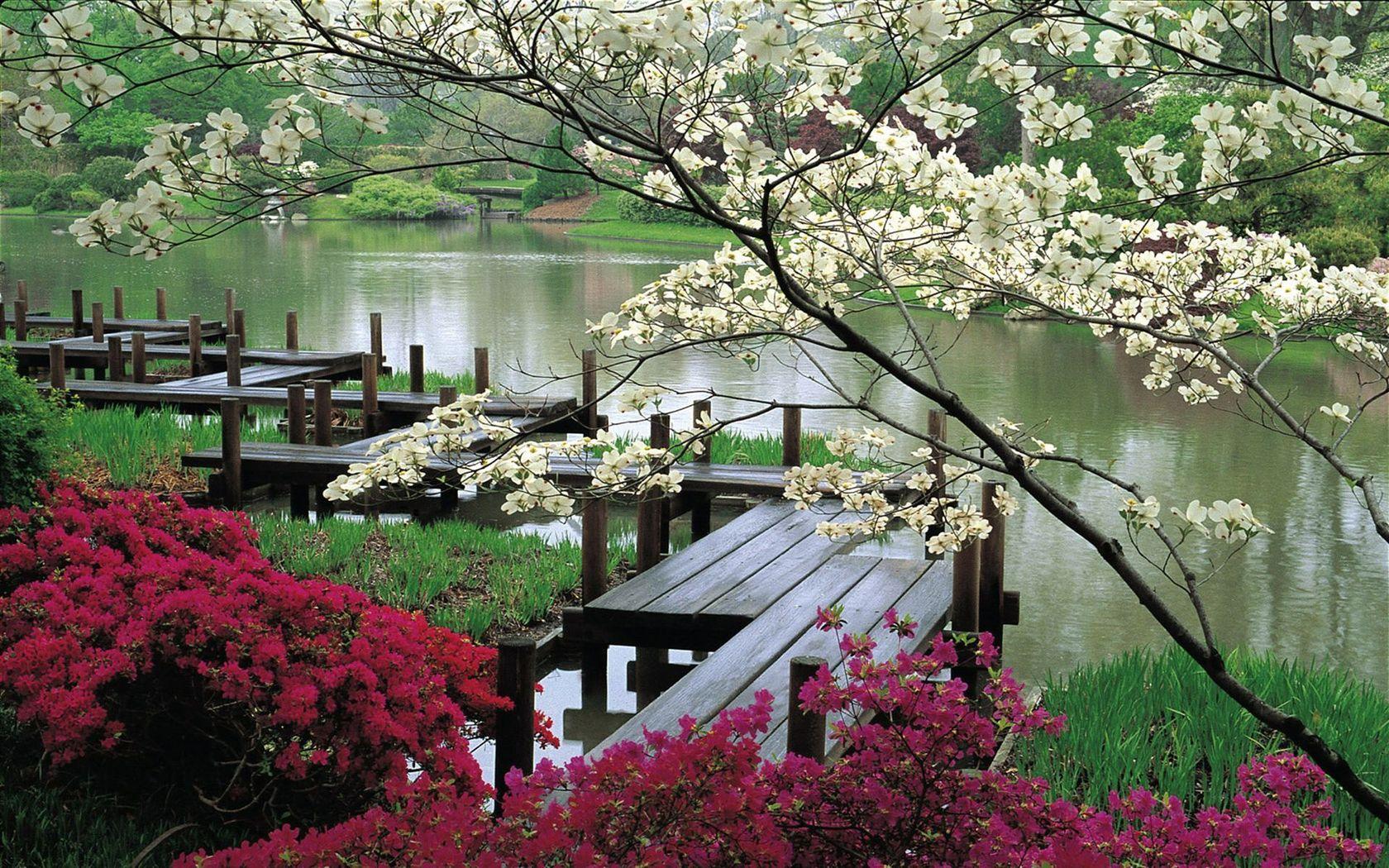 Природа пейзаж весна сад япония