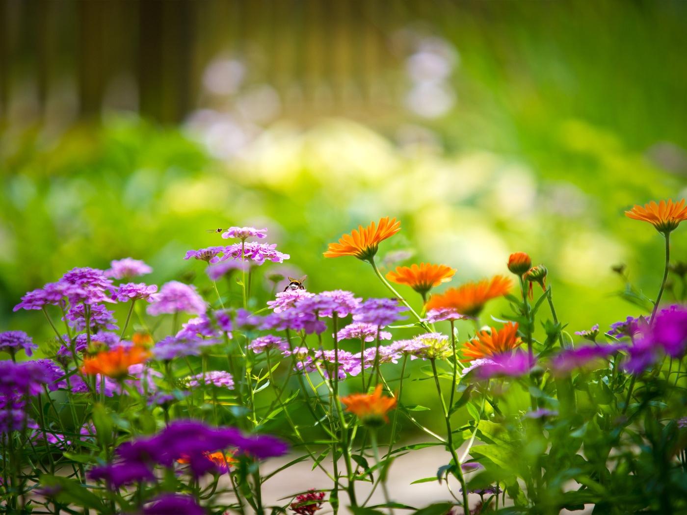 Цветы летом фото на рабочий стол