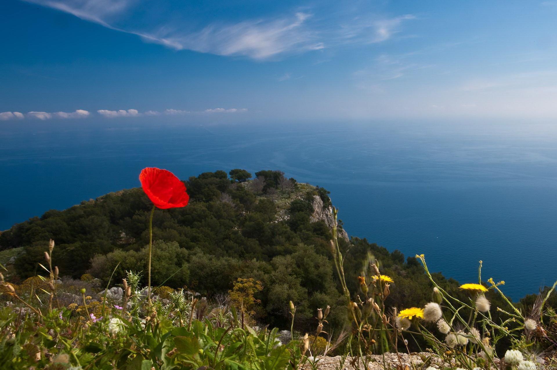 Природа, пейзаж Лето цветок, красный ...: priroda-foto.ucoz.ru/photo/leto/cvetok_krasnyj_vid_more_gory_nebo...