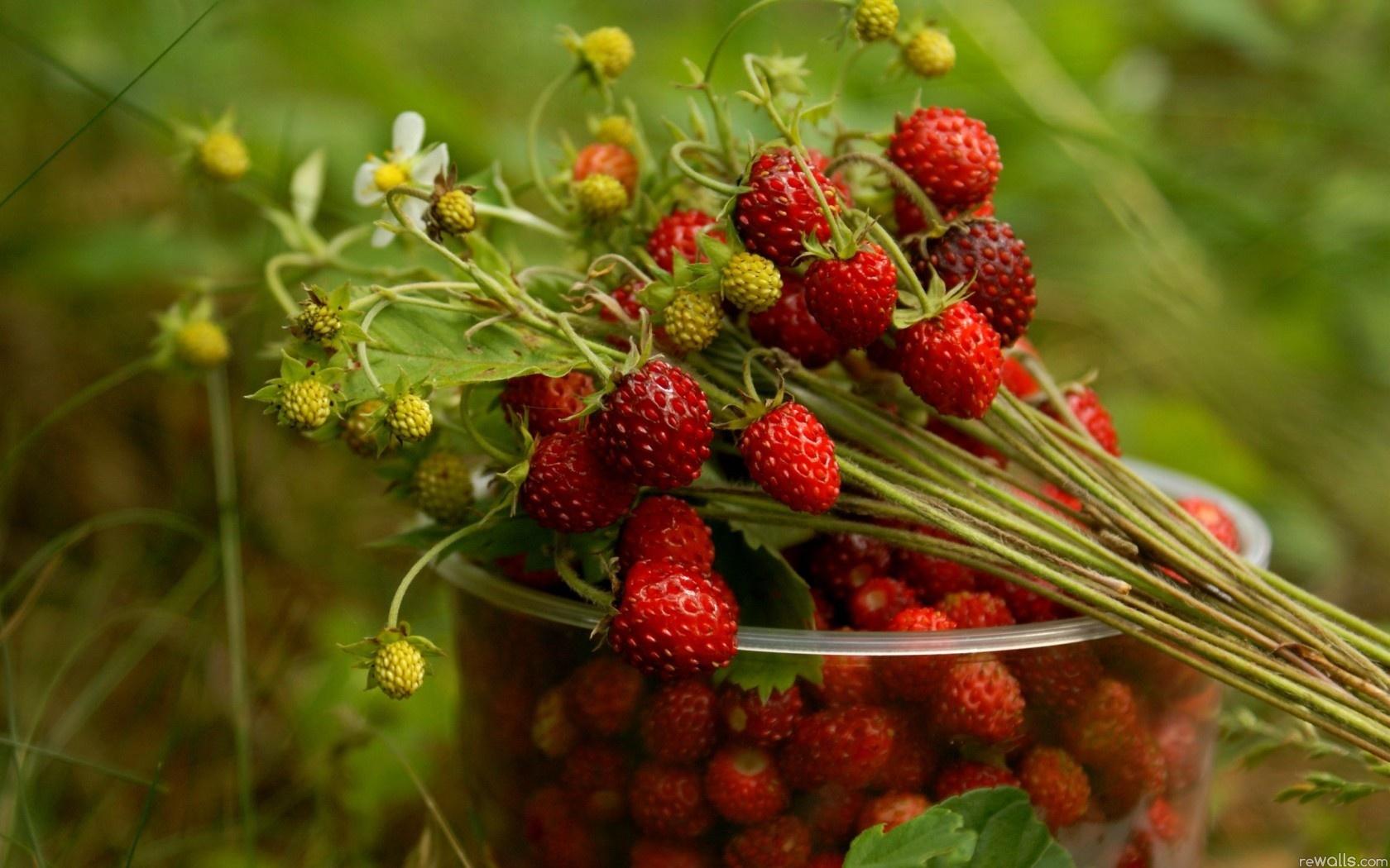 Природа пейзаж лето земляника ягоды