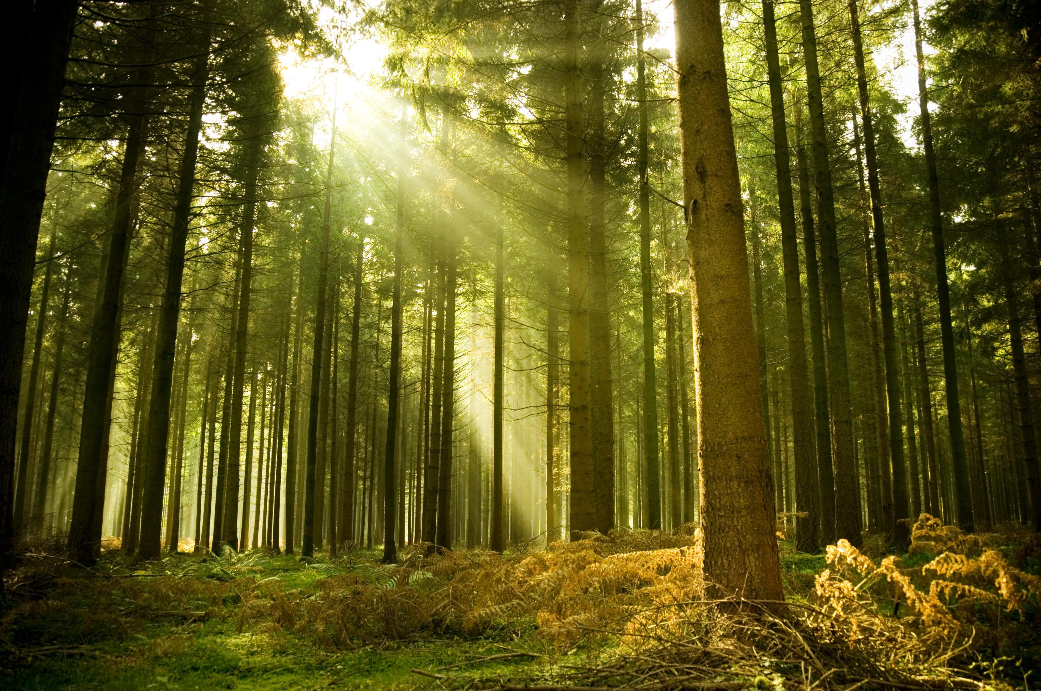Утро вечер деревья красивые картинки