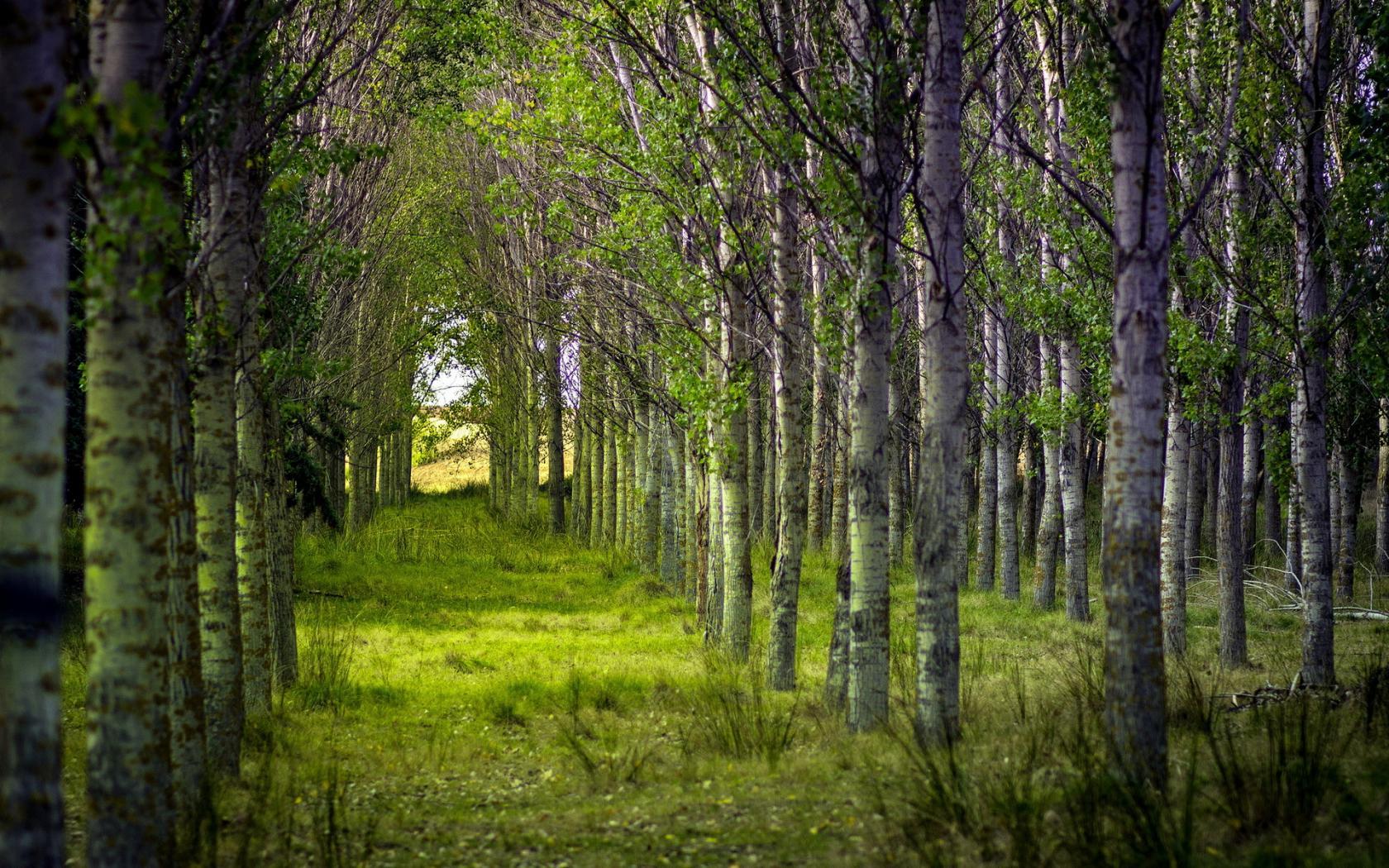 Лето лес деревья красивые картинки