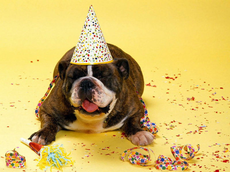 Поздравление с днем рождения с животными 81