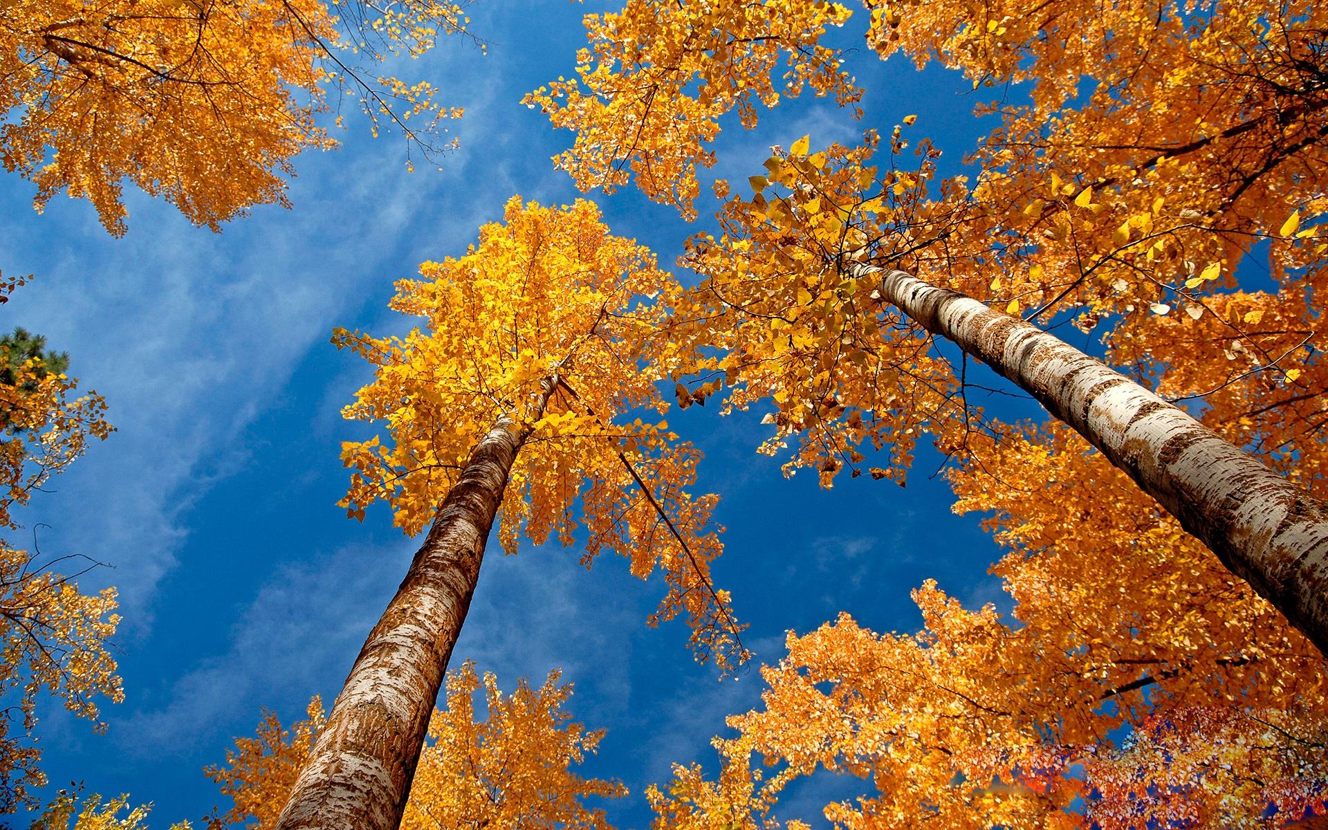 Осень листья желтые картинки
