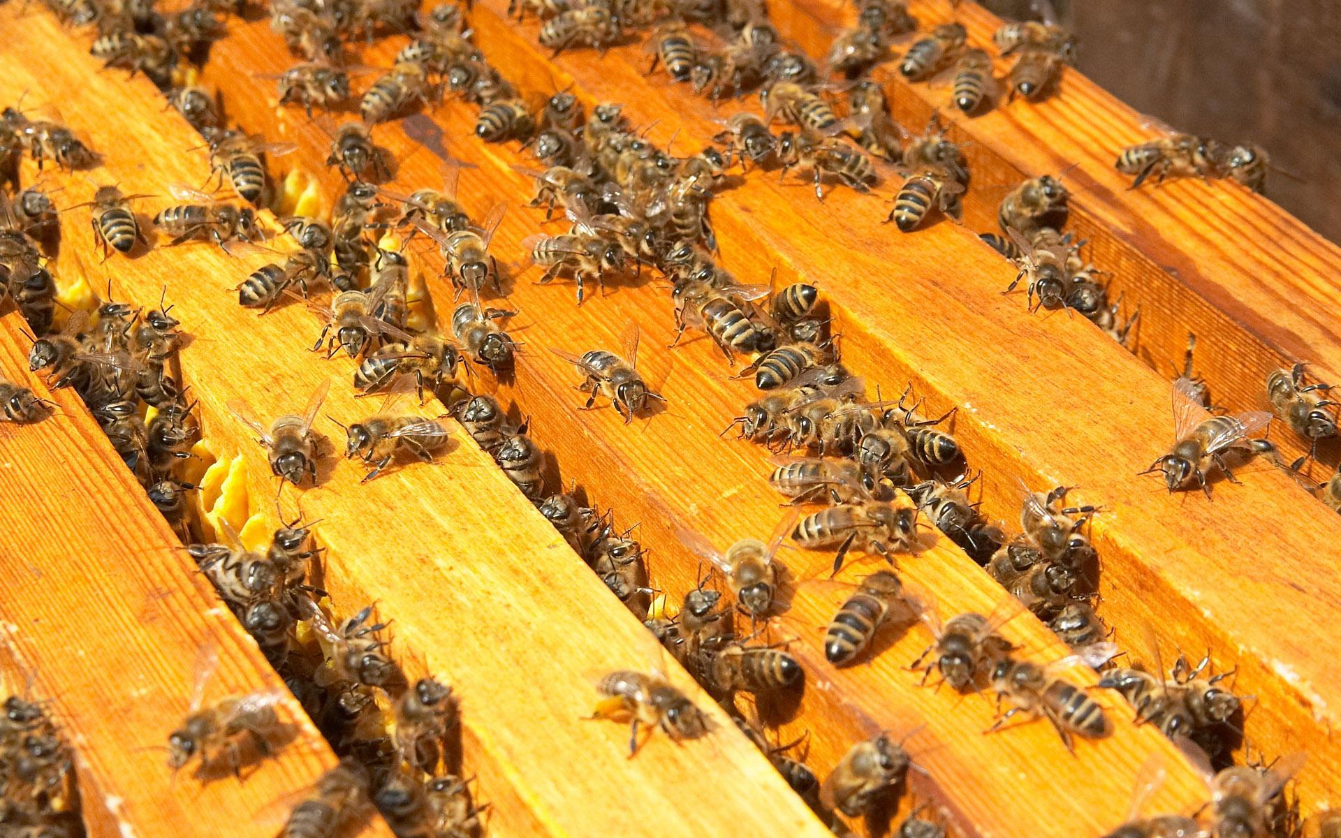 beekeeping essay