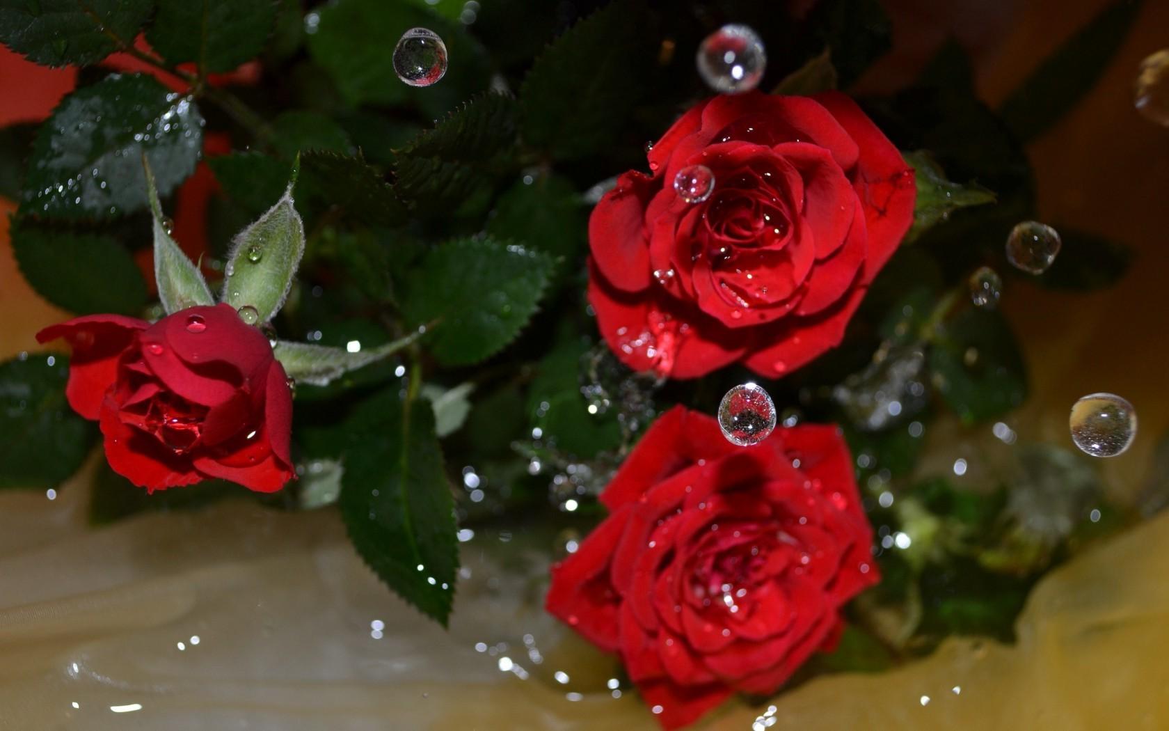 обои для рабочего стола розы анимация № 59061 без смс