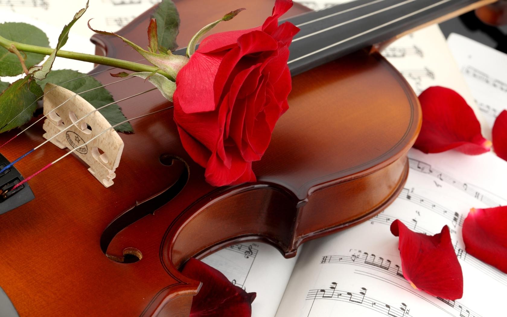 Скрипка и цветы картинки