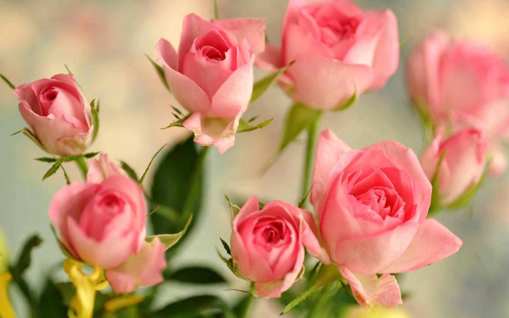 Обои на рабочий стол маленькие розы