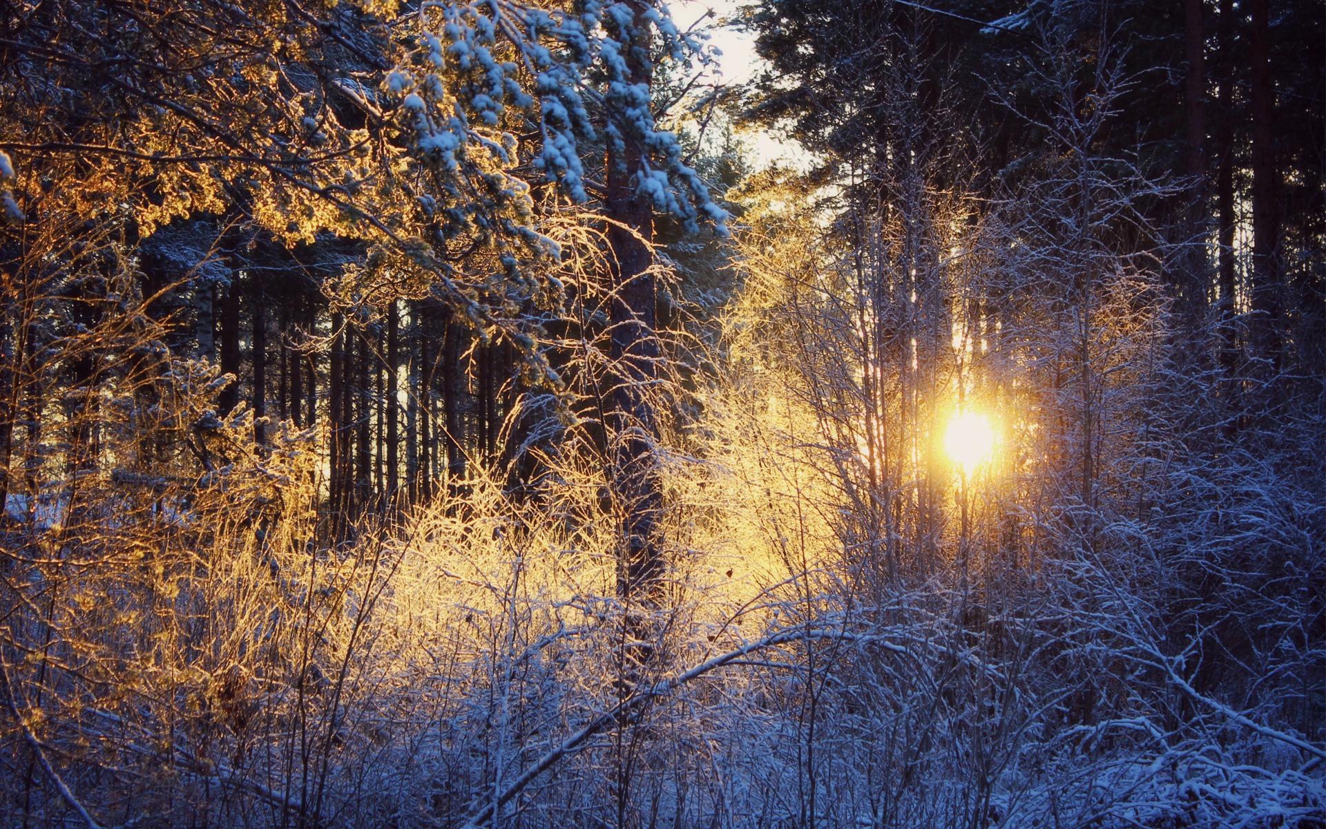 Фото зимней природы на рабочий стол