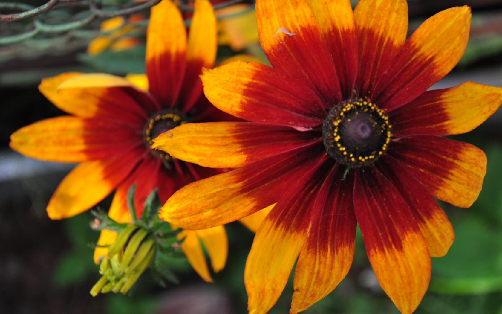 Виды желтых цветов фото