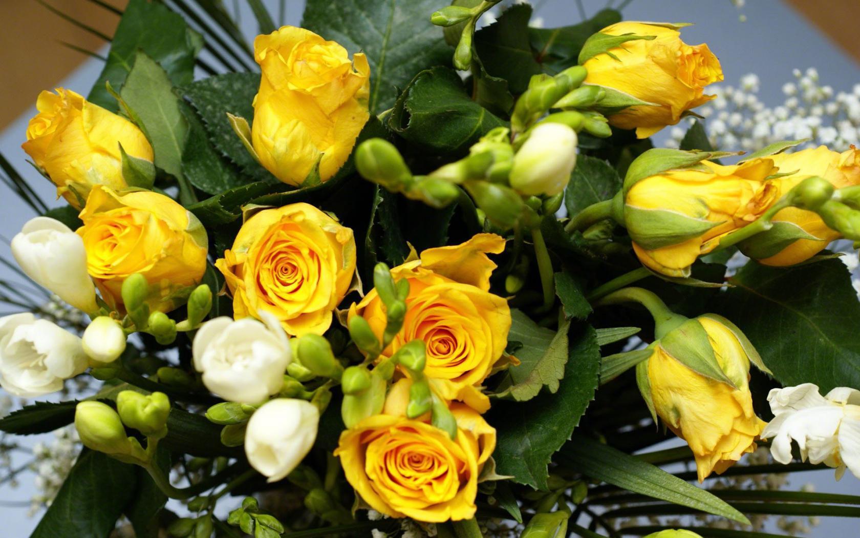 Природа пейзаж цветы розы желтые