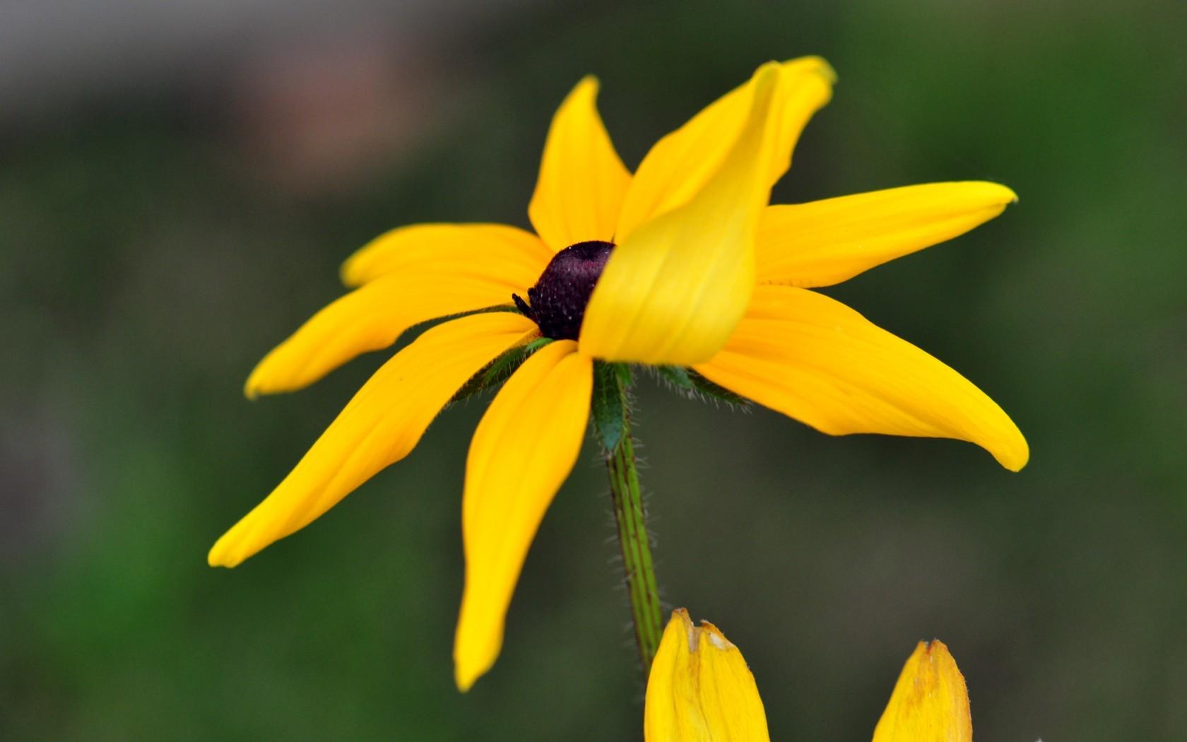 Природа пейзаж цветы ромашки желтый