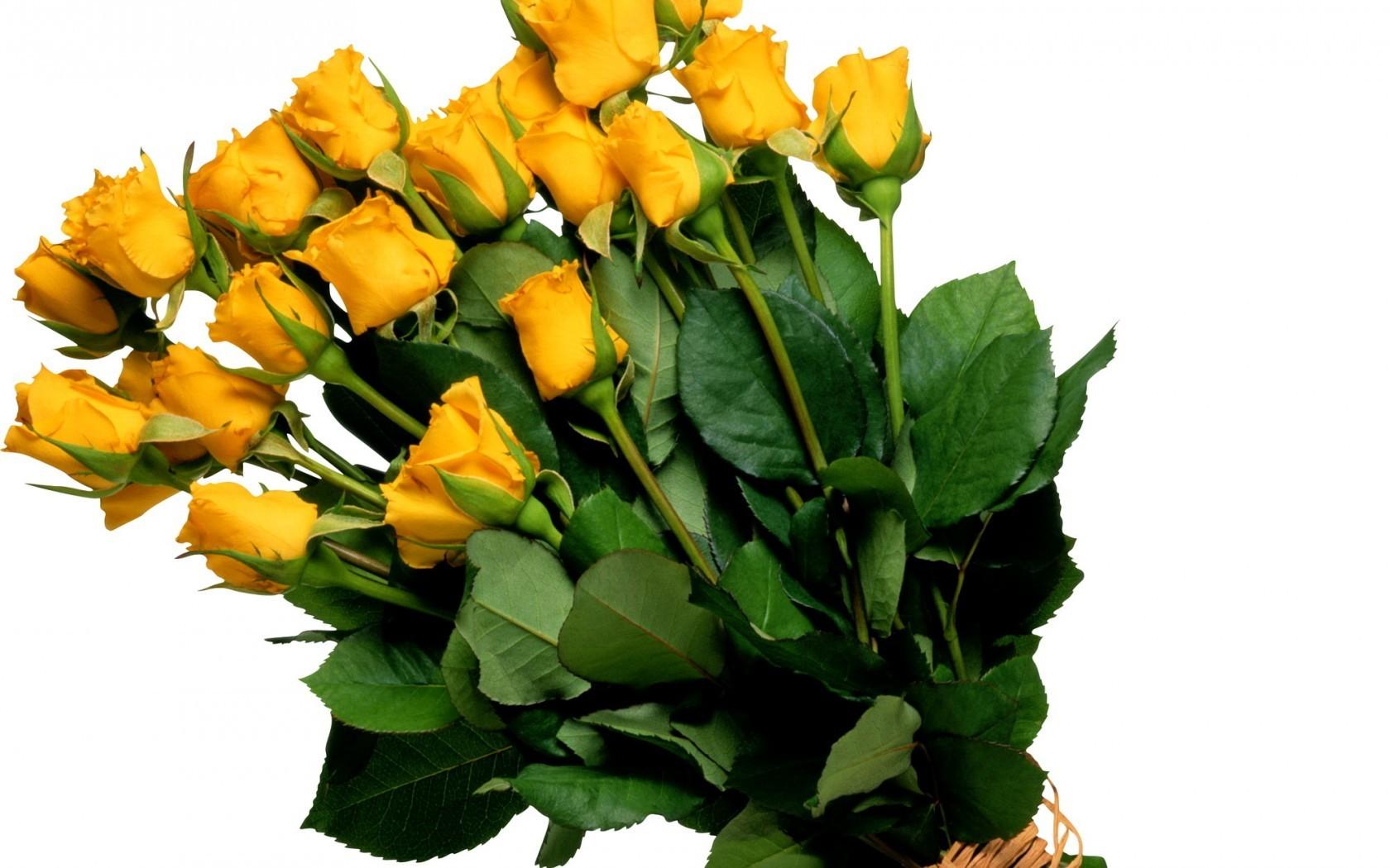 Цветы розы желтые цветок букет