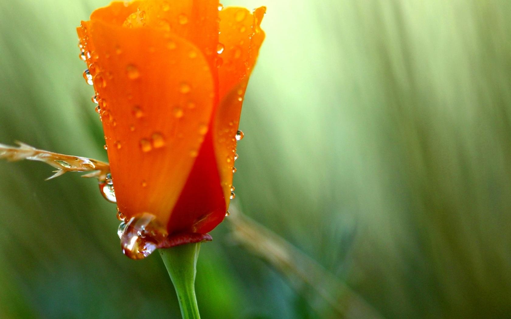 Цветок цвета зеленый оранжевый лето