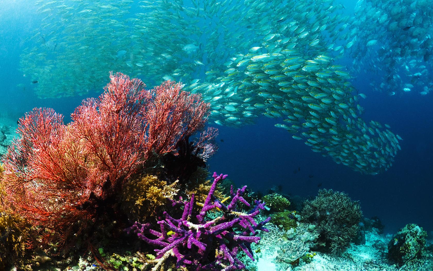 Природа пейзаж море подводный мир