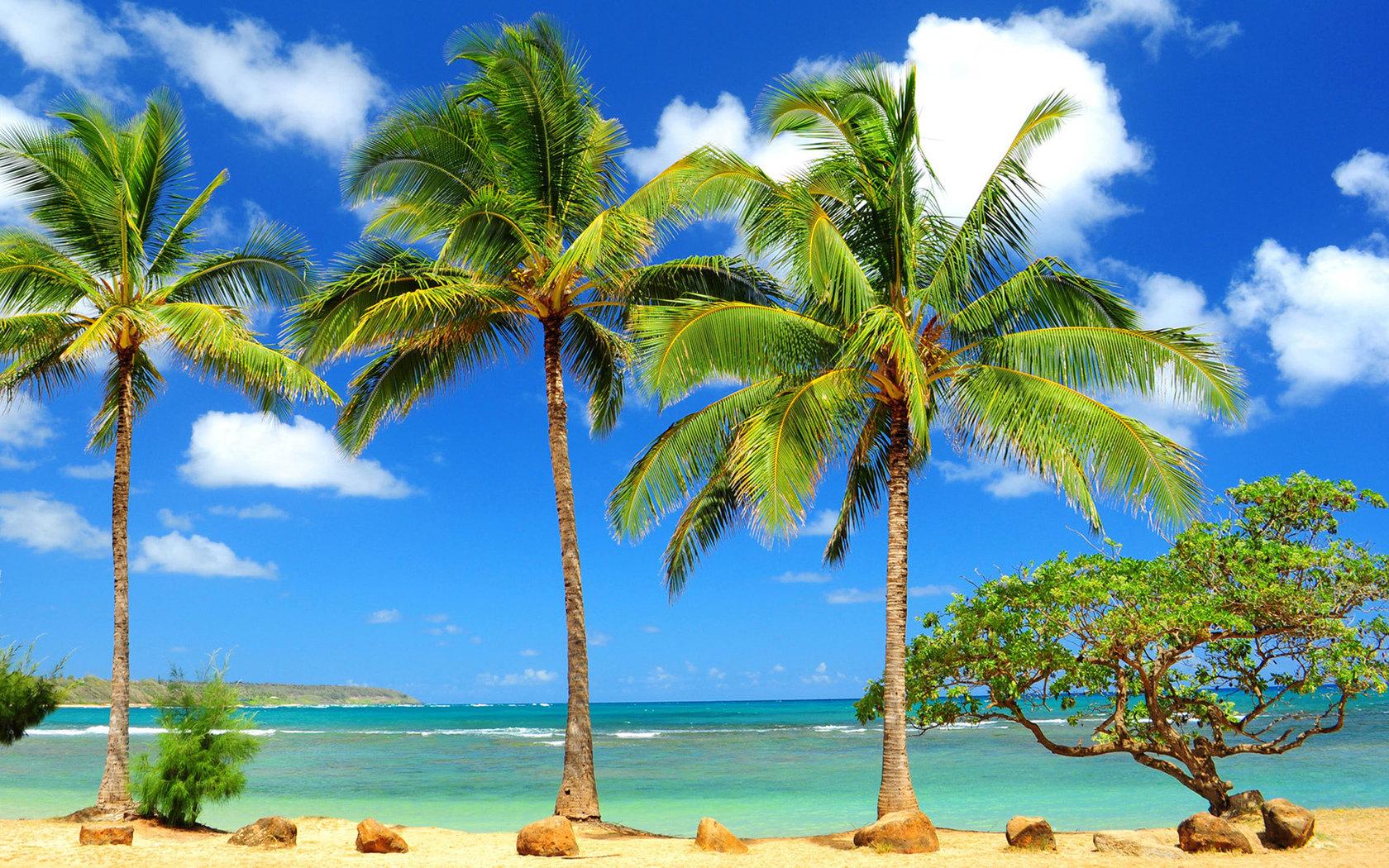 Природа пейзаж море океан дерево